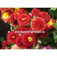 хризантема корейская Резея