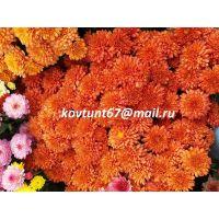 хризантема мультифлора Ursula Orange